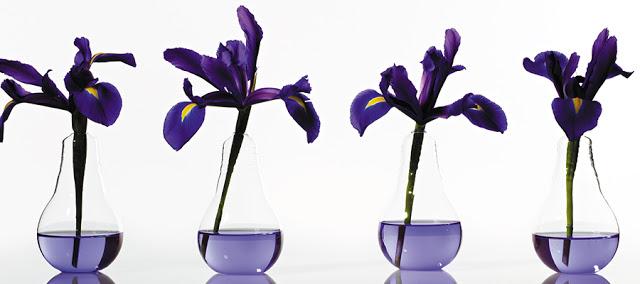 Accent Decor Viola Vase