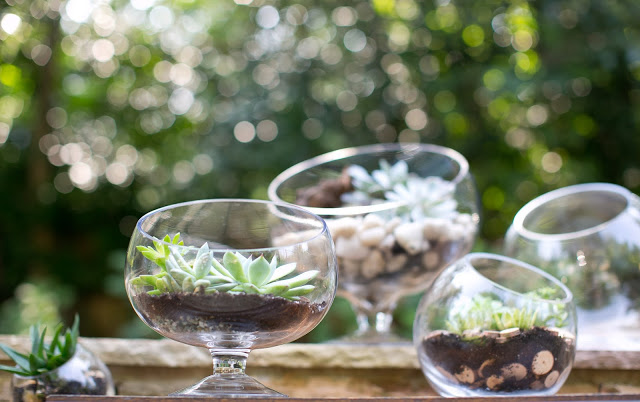 Accent Decor Terrariums